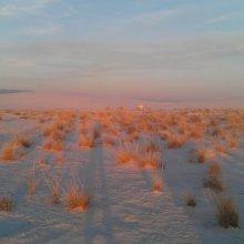 Mojave Desert. Image credit: Chi-Yun Kuo